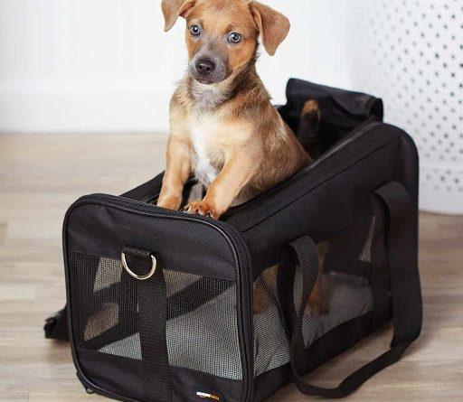 sac de transport chien prix
